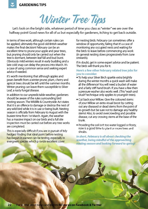 gardening tips for spring